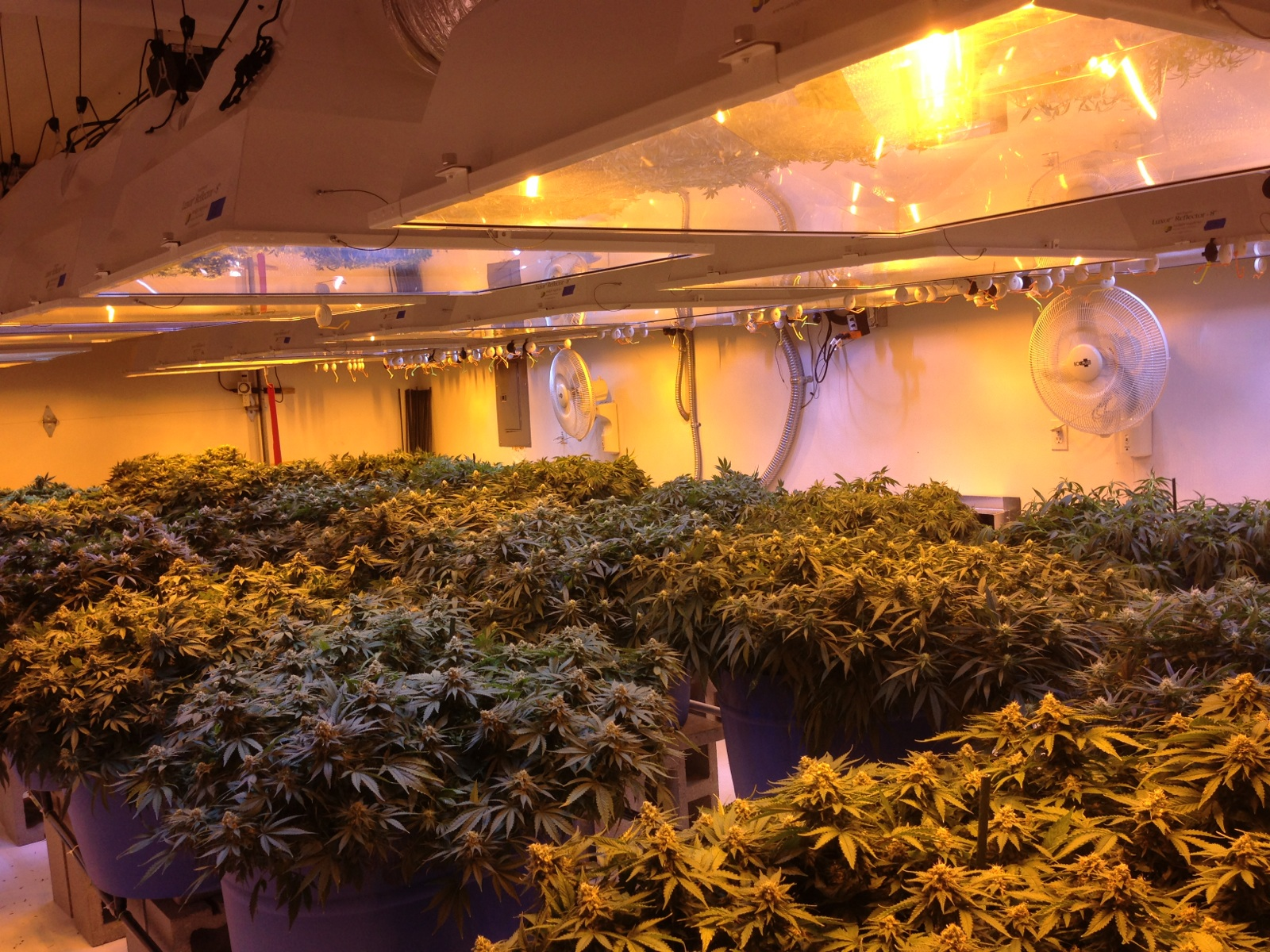 Remarkable Building A Grow Room Pics Decors Dievoon